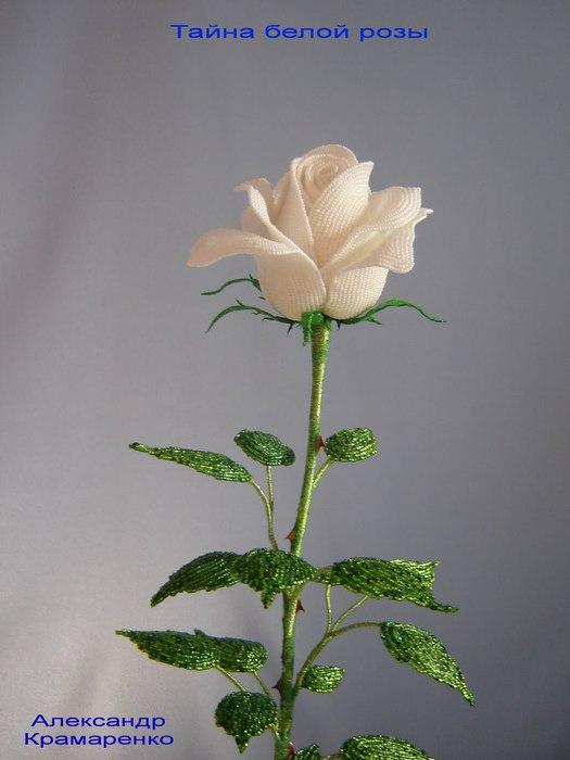 Розы | Просмотров: 2446